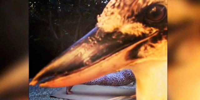Yoga yapan kadını trolleyen kuş