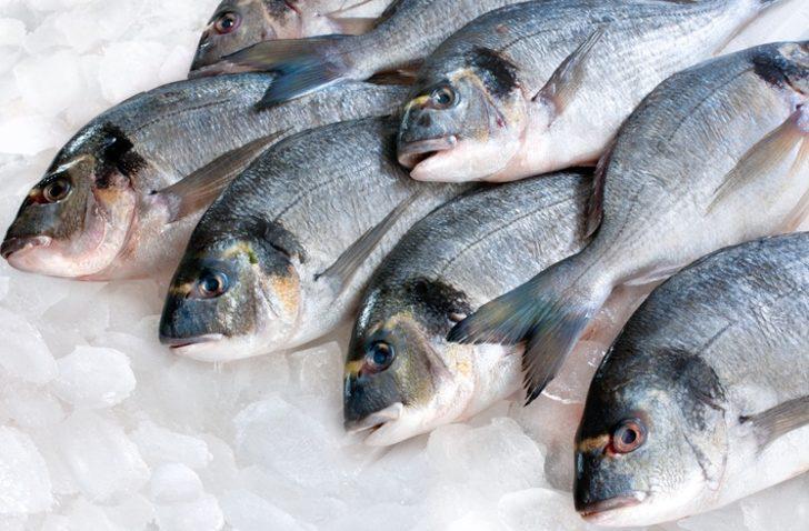 Bu balık türlerine dikkat! Hangi balık türlerini yememeliyiz?