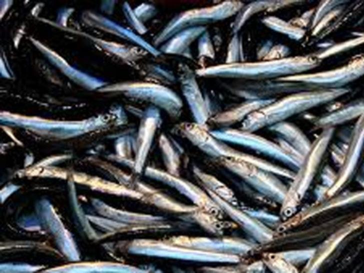 Av sezonu kapandı, balık el yakıyor