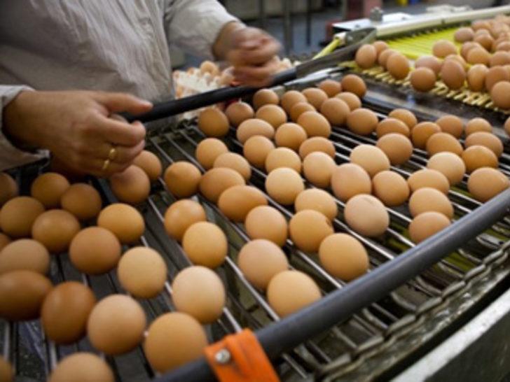 Köy yumurtası hilesine son!