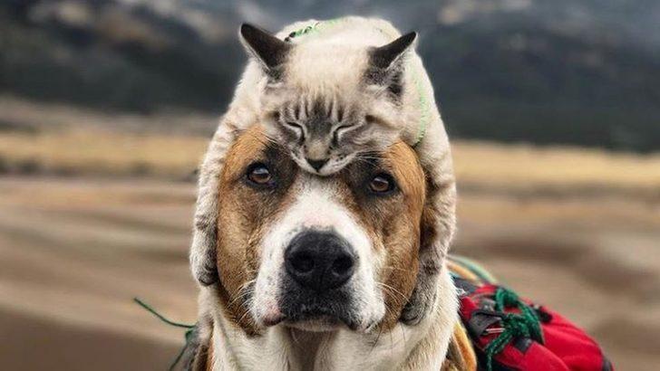 Henry ve Baloo: Doğasever kedi ile köpeğin alışılmadık yol arkadaşlığı