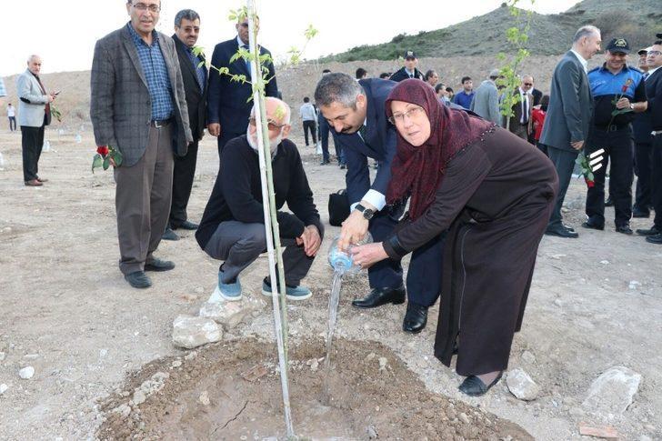 Zeytin Dalı Harekatı şehitleri için 'Akçaağaç' dikildi