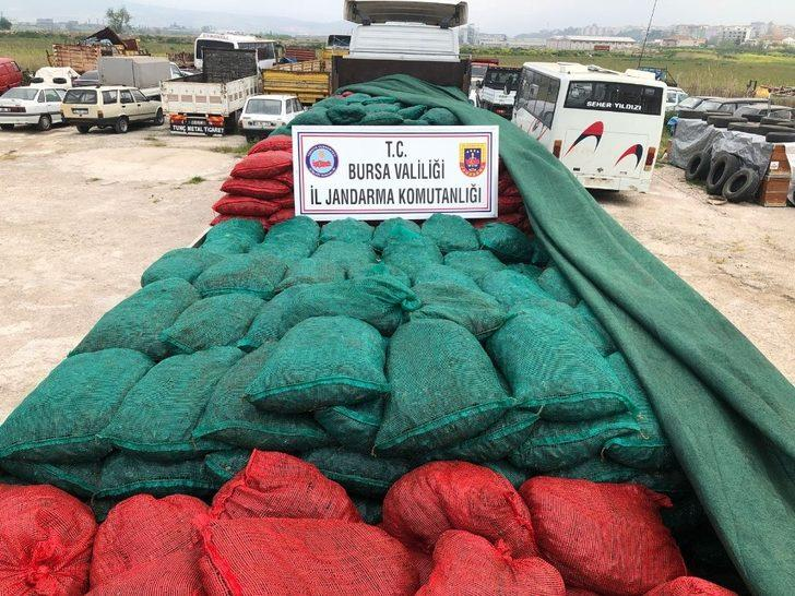Bursa'da 30 ton kaçak midye ele geçirildi