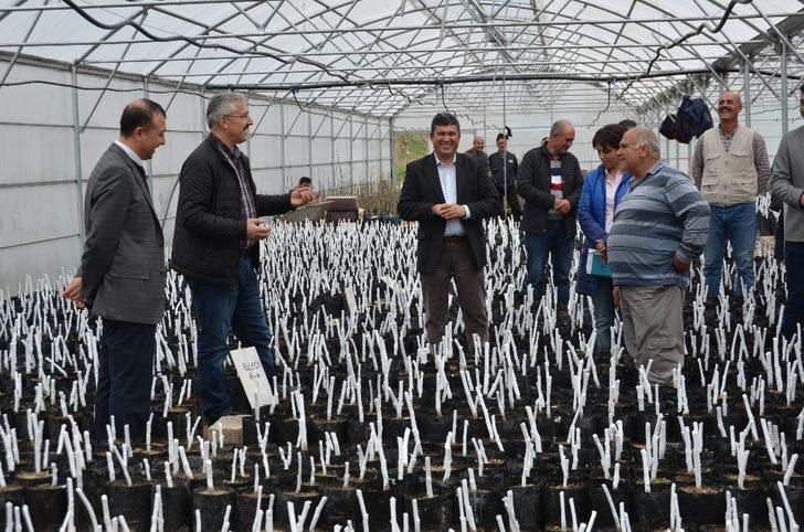 Mersin'de 16 milyon 750 bin fidan üretildi