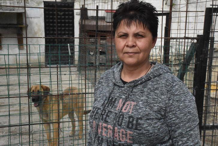 Hayvanseverlerden barınaktaki köpeklerin durumuna tepki (2)