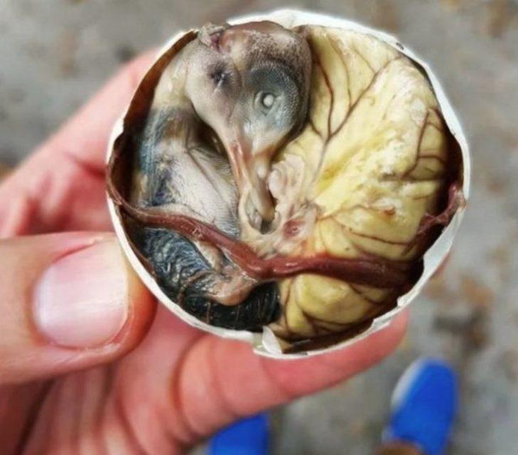 Balut: Filipinler'e özgü bir yemek. Henüz şekillenmeye başlamış ancak ördek olmamış embriyo yeniliyor.