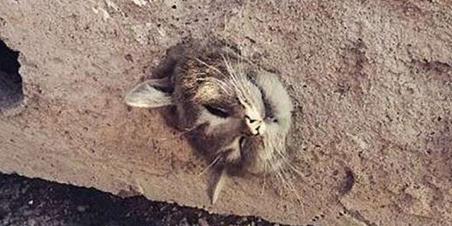 Moloza sıkışan kedi böyle kurtarıldı