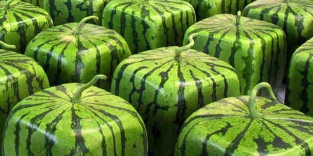 İşte dünyanın en pahalı 8 meyvesi