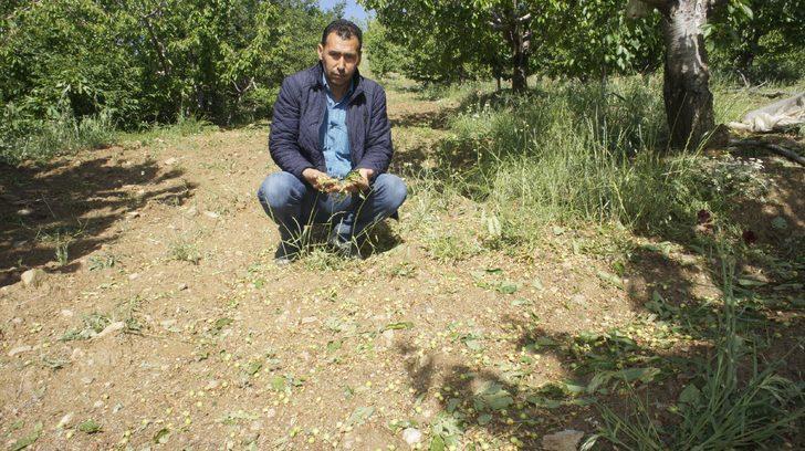 Alaşehir'de dolu, tarım arazilerini vurdu