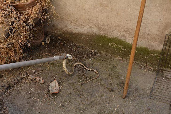 Balkonda saksıların arasındaki yılanı itfaiye ekibi yakaladı