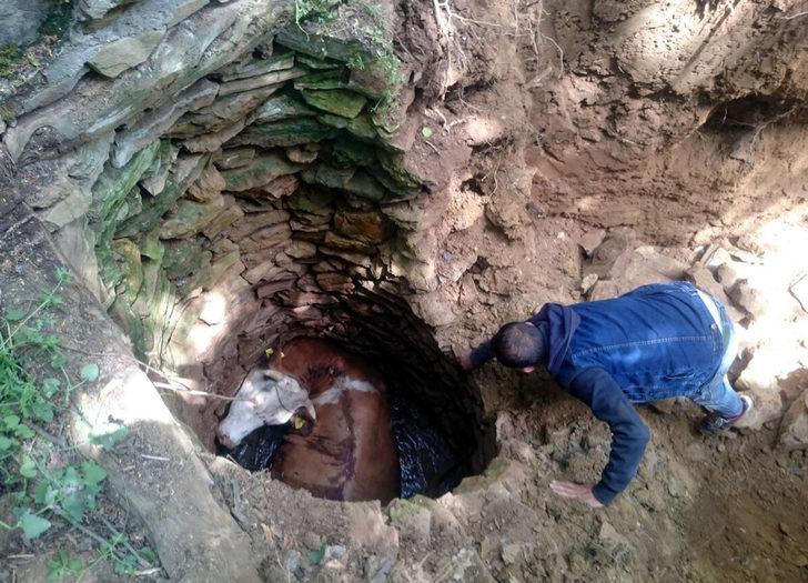 4 metrelik su kuyusuna düşen ineği AFAD kurtardı