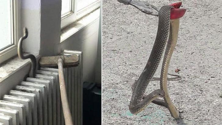 Okulda yılan paniği! Tüm öğrenciler tahliye edildi