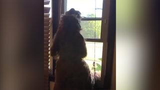 Köpeğin bu görüntüsü sosyal medyayı salladı