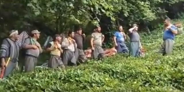 Gürcü işçilerin çay toplama görüntüleri ilgi gördü