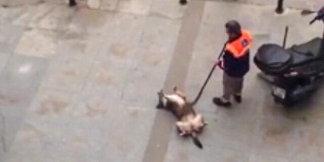 Sokak köpeğini mutlu eden temizlik işçisi