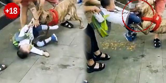 Tüyler ürperten görüntü! Pitbull cinsi köpek küçük çocuğa saldırdı