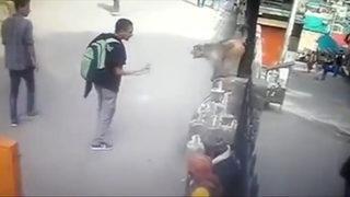 Maymunlar kabusları oldu