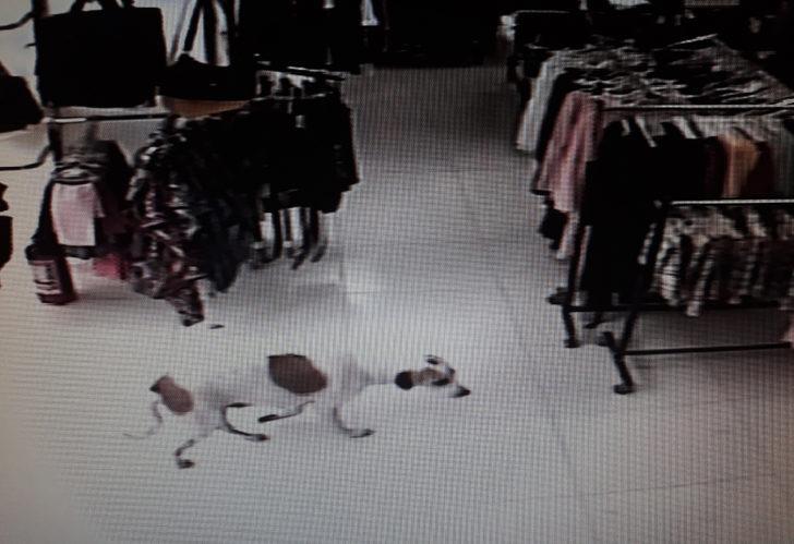Gaziantep'te yağmurdan mağazaya sığınan köpek, inşaatta ölü bulundu!