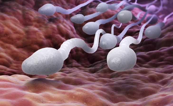 Sperm testi bozukluklarının nedenleri