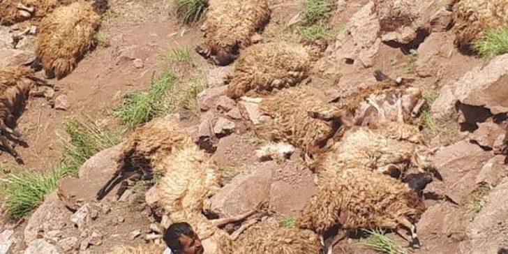 Van'da intihar eden 500 koyun hakkında açıklama