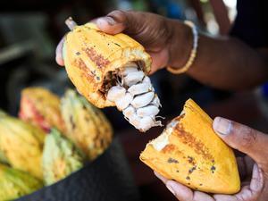 Kakao fiyatları gram altını solladı