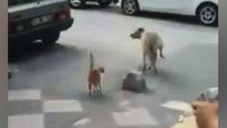 Adana kedisinden ilginç hareketler!