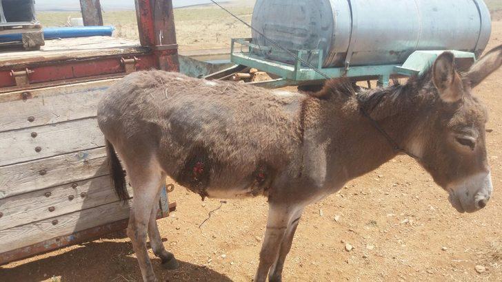 Gürültü yapıyor diye komşu çiftlikteki eşeği tüfekle yaraladı