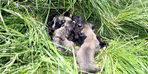 Anneleri ölen 5 yavru köpek korumaya alındı