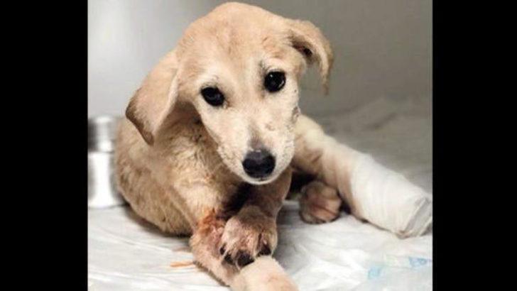 Mardin'de yavru köpek Kuzey'i vuran yakalandı