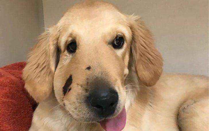 'Kahraman' köpek sahibini çıngıraklı yılandan kurtardı