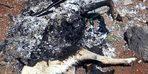 Diyarbakır'da vahşet; köpeği canlı canlı yaktılar