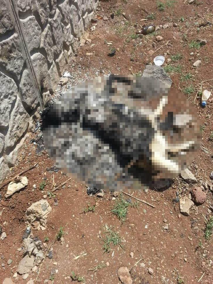 Diyarbakır'da vahşet! Köpeğe tecavüz edip canlı canlı yaktılar!