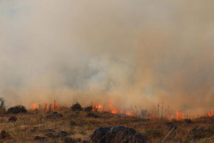 Gaziantep'te çam ormanı yangını