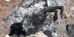 Diyarbakır'da yakılan köpekle ilgili başsavcılıktan soruşturma