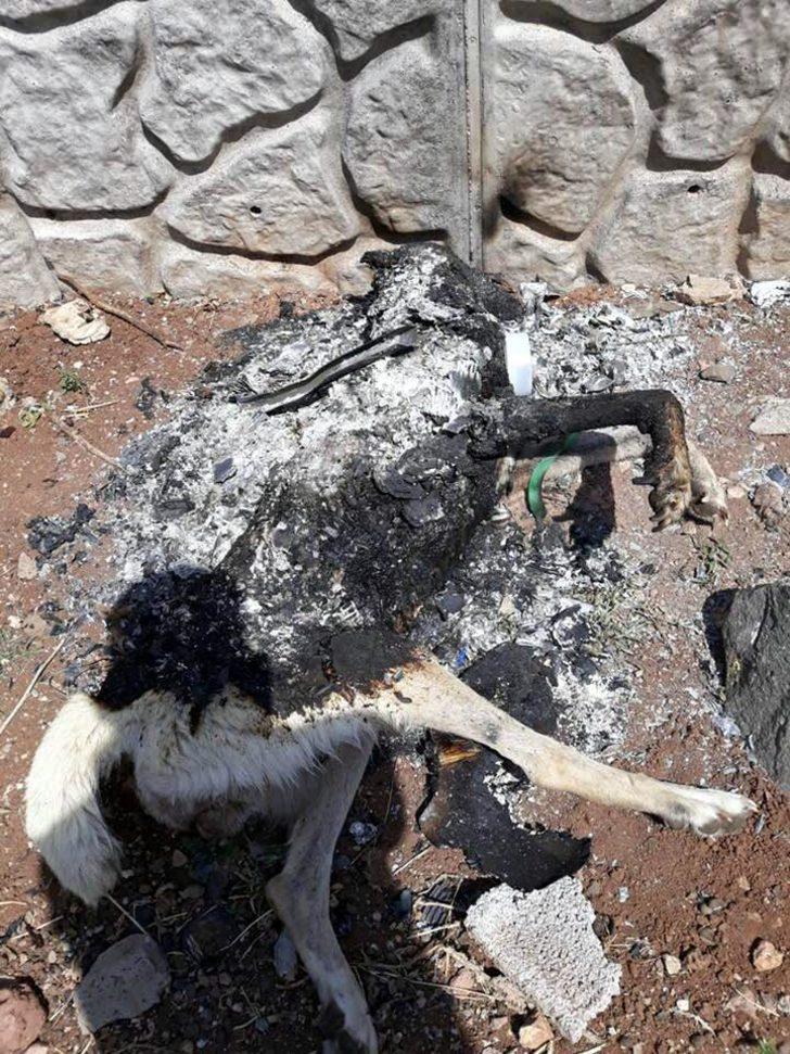 Diyarbakır'da köpeği mezarlık çalışanı yakmış