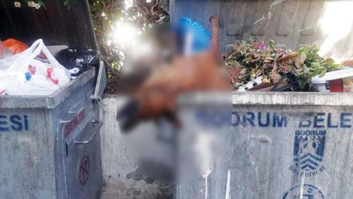 Öldürülüp çöpe atılan köpekler Bodrum'u ayağa kaldırdı