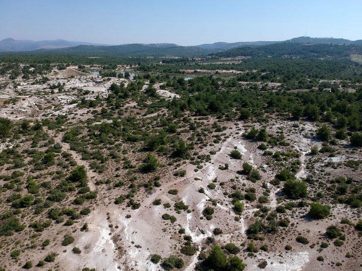 Fosil ağaç ormanı, yok olma tehlikesiyle karşı karşıya