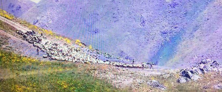 İran askerleri sınırda970 hayvana el koydu, 4 çobanı gözaltına alındı