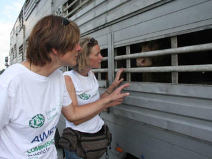 Kapıkule'de hayvan baskını