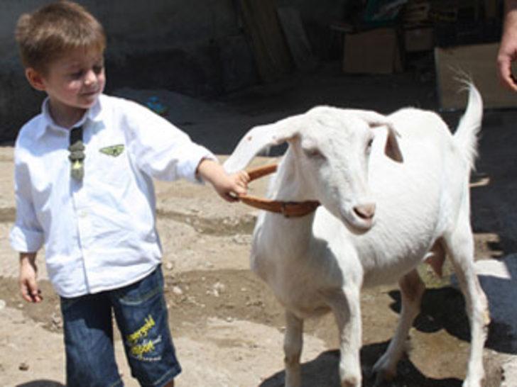 Köyde keçiye ceza!