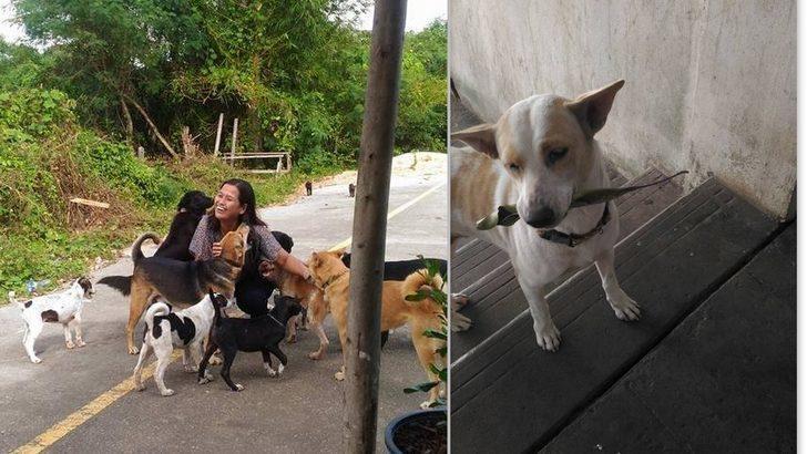 Bu nasıl bir sevgi böyle! Kendisini besleyen kadına çiçek götüren köpek