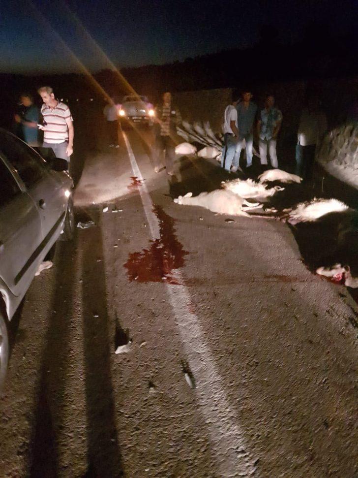 Otomobil koyun sürüsüne daldı, 14 koyun telef oldu