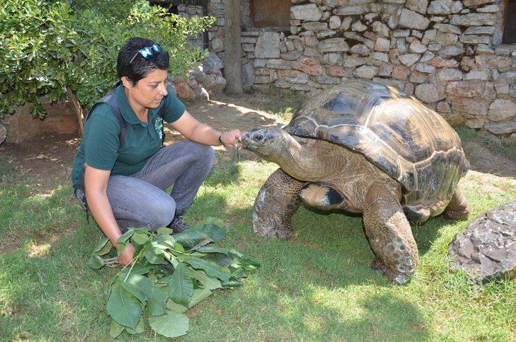 Kaplumbağa 'Tuki' dünya şampiyonu bildi