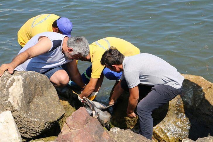 Yalova'da kıyıya ölü yunus vurdu