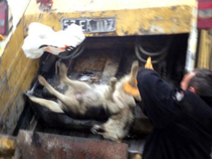 Sinop'ta köpek katliamı