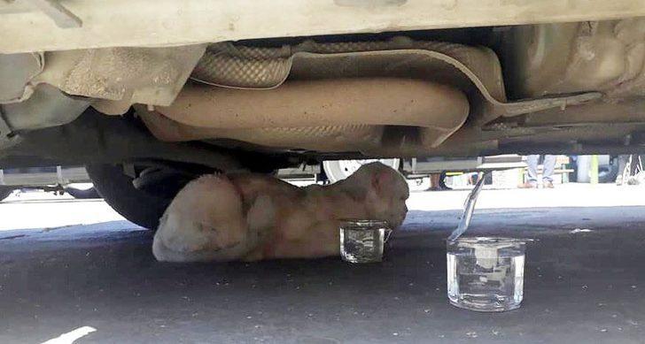 Minibüsün motorunda 80 kilometre giden kedinin sahibi: Yaşaması mucize