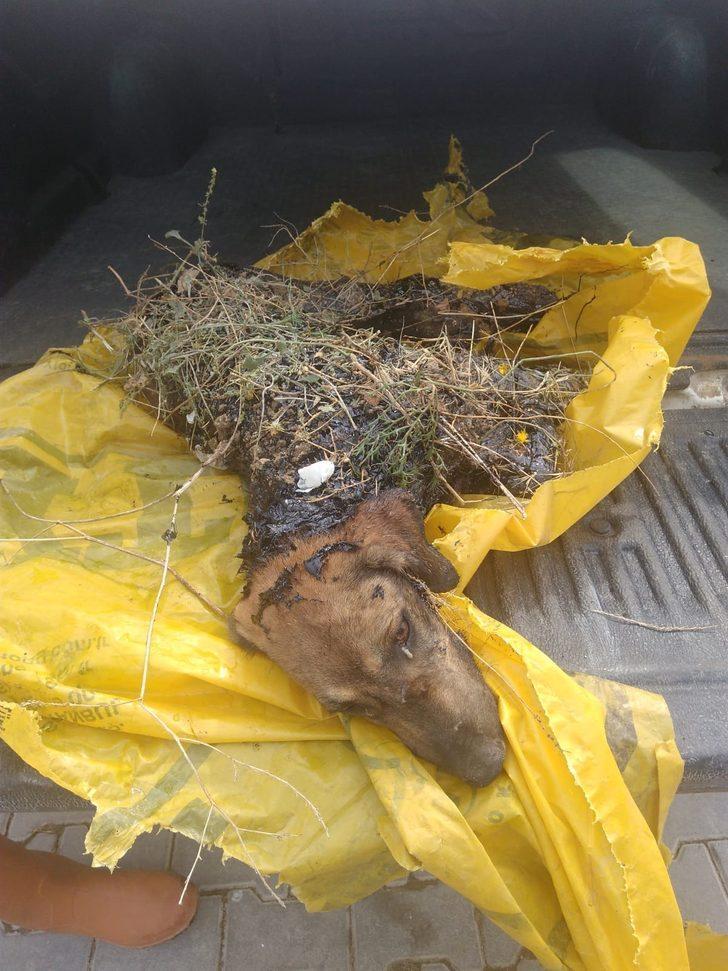 Zift dolu çukura düşen köpek öldü