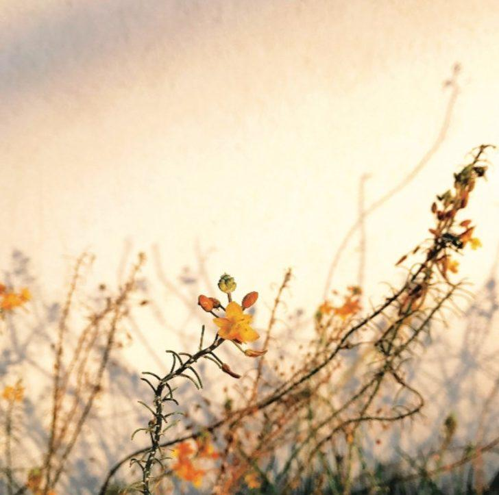 Alison Helena (Birincilik Ödülü - Çiçekler)