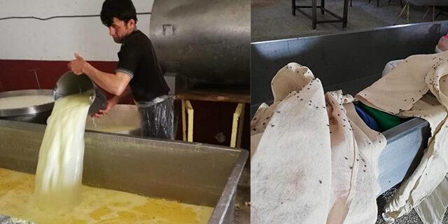 Kaçak kaşar peyniri imalathanesinde iğrenç görüntü