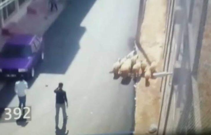 Çalınan küçükbaşlar, polis tarafından bulundu